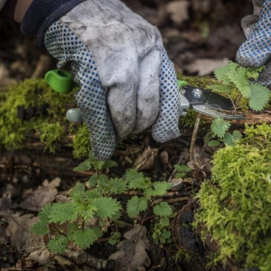 the-botanist-gin-foraged-ingredients-_DSC8758